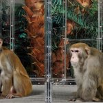 What a bunch of dieting monkeys teaches us about some human scientists