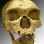 'Adventurous' woman sought to carry Neanderthal baby: candidate for dumbest stem cell story of 2013 already pops up