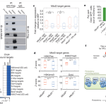 Stem Cell Journal Club: 100% reprogramming efficiency reported, but does it matter & what's the mechanism?