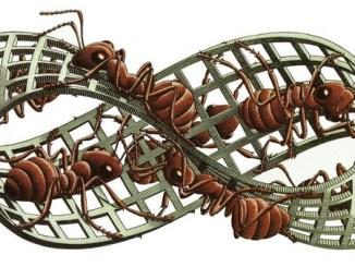 EscherMobius