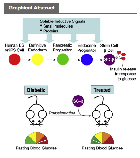 Harvard-stem-cells-Diabetes