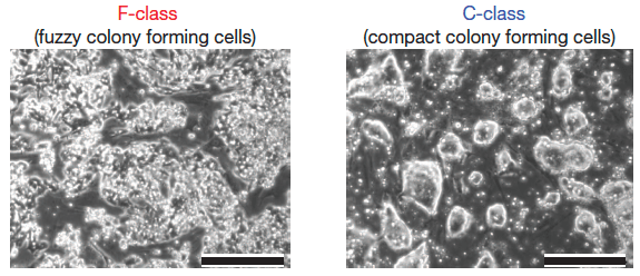 F-class-stem-cells