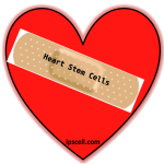 Stem Cells on Valentine's Day: Update on Cardiac Regenerative Medicine