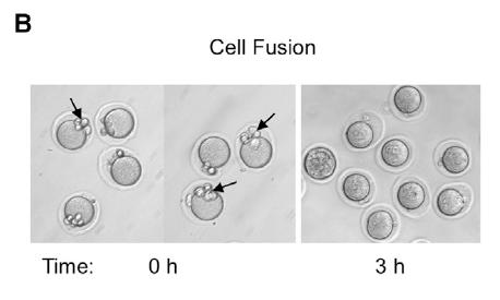 Reddy, et al. Figure 6B