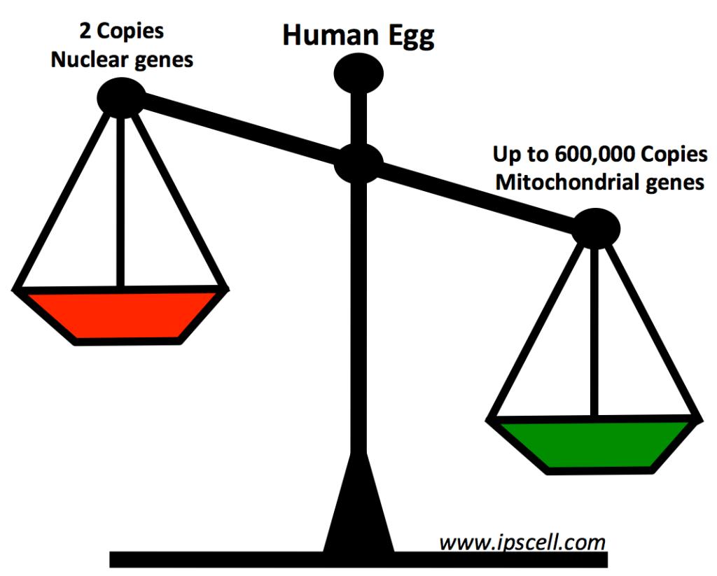 mitochondrial-genes