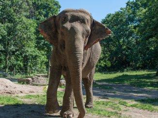 Happy The Elephant