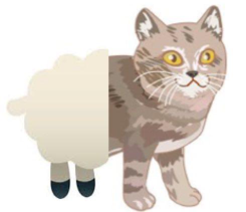sheep-cat