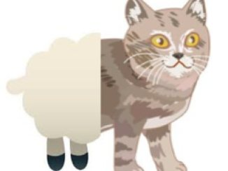 sheep cat