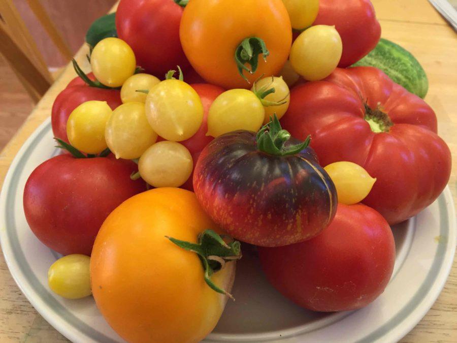 Pauls-tomatoes-e1466874775357