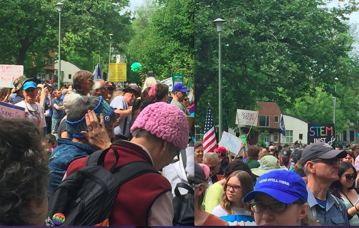 Science March Brain Hat