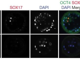 Fogarty Fig 3d human embryo CRISPR