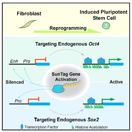 Liu-et-al-Cell-Stem-Cell-IPS-cells-2018