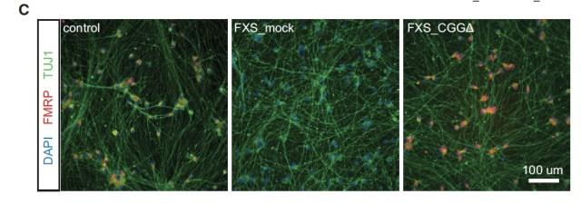 Liu, et al. Figure 6C Fragile X CRISPR, Cell