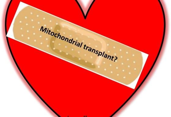 heart stem cell, repair