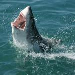 Lessons from sharks: how we might regrow new teeth via stem cells