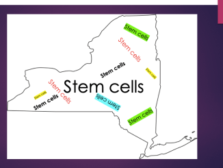 NY stem cells