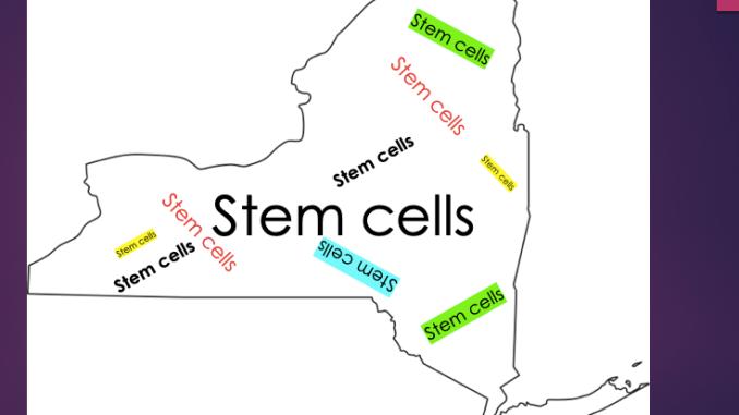 NY stem cells