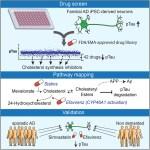 Stem cell good news: novel cancer work, new CA bills, Alzheimer's, & more pubs