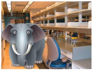 elephant-in-the-lab-covid-19-lab-ramp-up