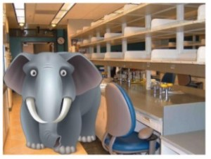 elephant in the lab, covid-19 lab ramp-up