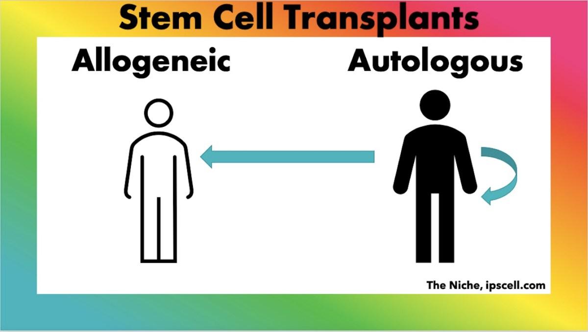 autologous vs allogeneic stem cell transplants. infographic paul knoepfler the niche.