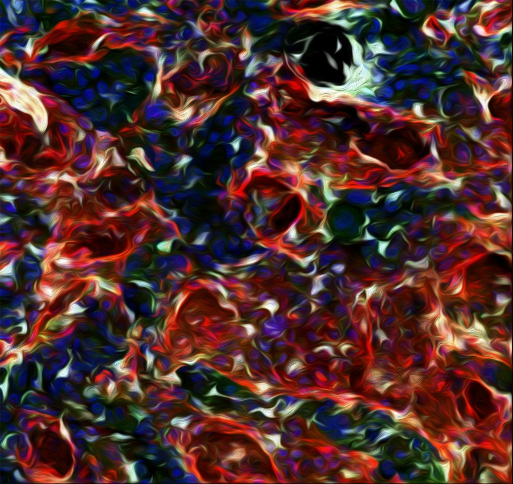 The Niche stem cell picture contest winners: gut & astrocytes