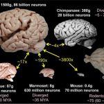 Weekly reads: New FDA guidance, brains, MSCs, senescence