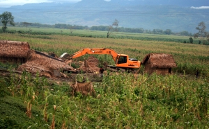 Peasant farms razed to the ground in Polochic Valley, Guatemala.  / Credit:Courtesy of Comité de Unidad Campesina