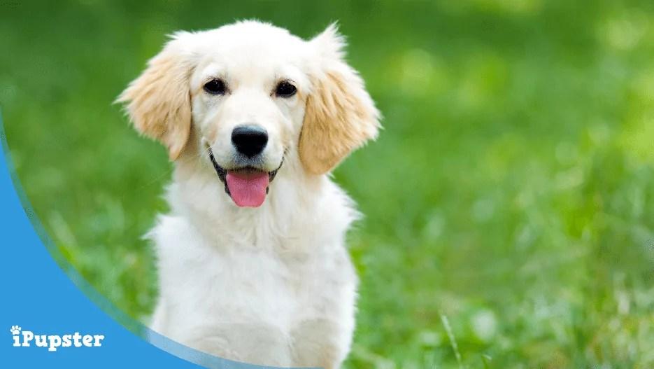 Dog Socializing - How To?