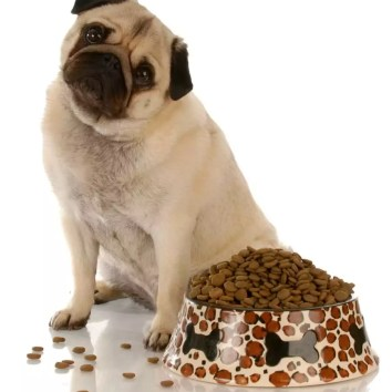 What Do Pugs Like To Eat?
