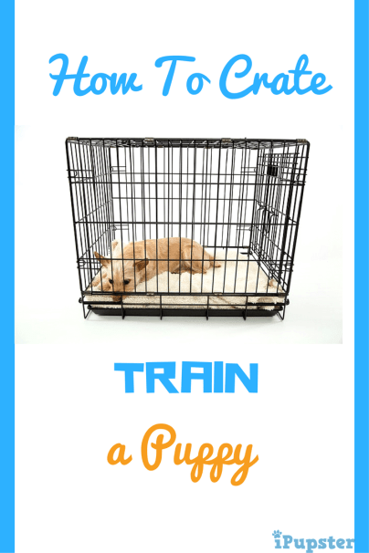Crate Tips for a Puppy