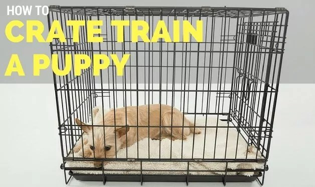 Crate Training Tips for a Puppy