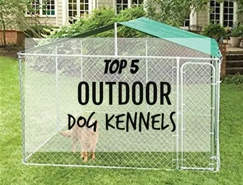 Outdoor Dog Kennels Reviews