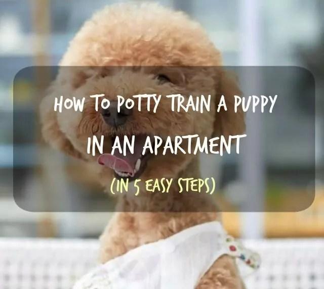 Puppy Wearing Puppy Pads