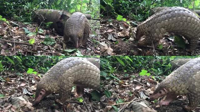 清白是罪?菲律賓總統狠心禁毒,卻被吸毒者母親聯名起訴