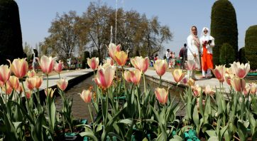 Jammu & Kashmir, Apr 08 (ANI): A general view of blooming Tulip flowers at Asia's biggest Tulip Garden in Srinagar on Thursday. (ANI Photo)