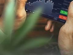 Buy Marijuana Stocks