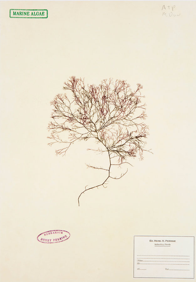 Mark  Dion's Herbarium at Graphicstudio
