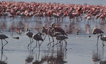 Il lago di Urmia, riserva della biosfera dall'UNESCO, rischia di scomparire 