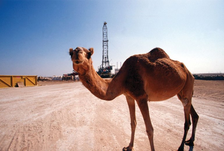 T-66_31_camel