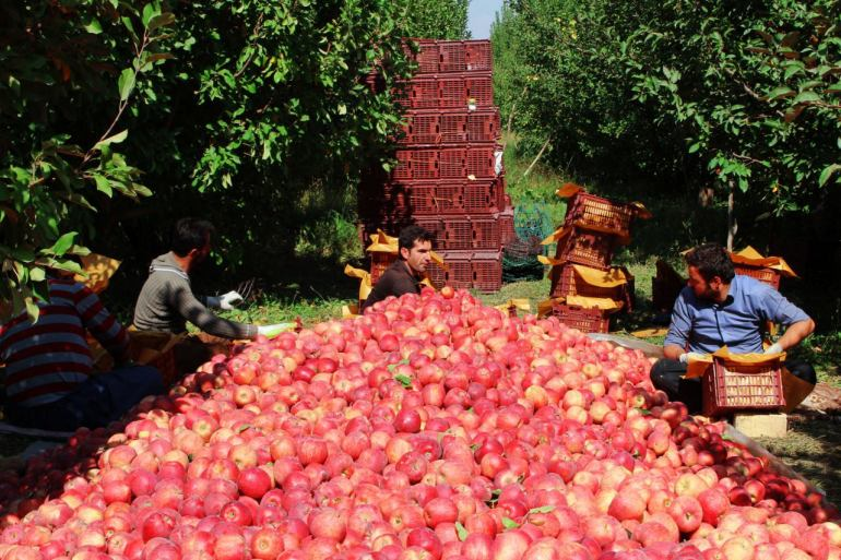 Apples and agriculture in Iran
