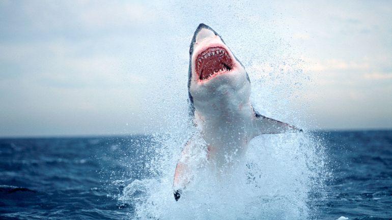 shark_1280p