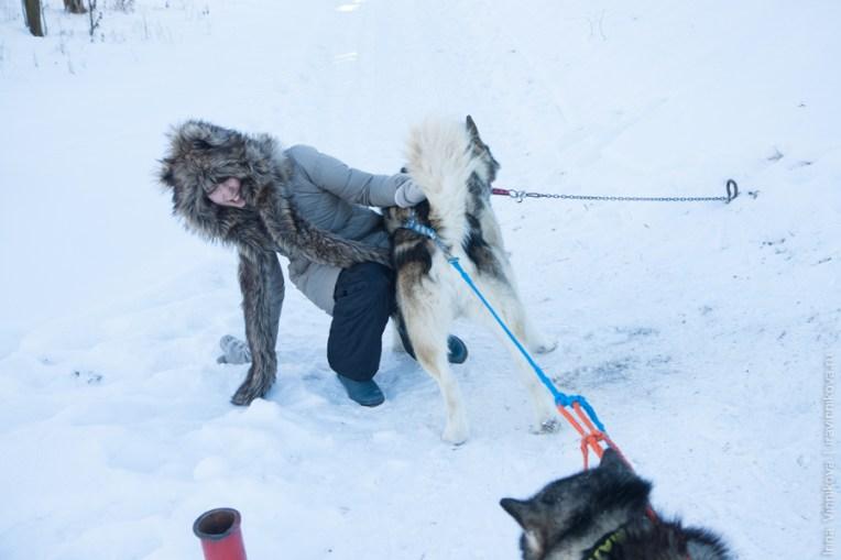 питомник аляскинских маламутов Жано Zhano