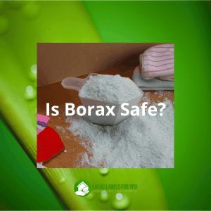 Borax and boric acid safety. A photo of powdered sodium borate.