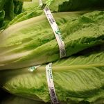 E.coli outbreak linked to romaine lettuce