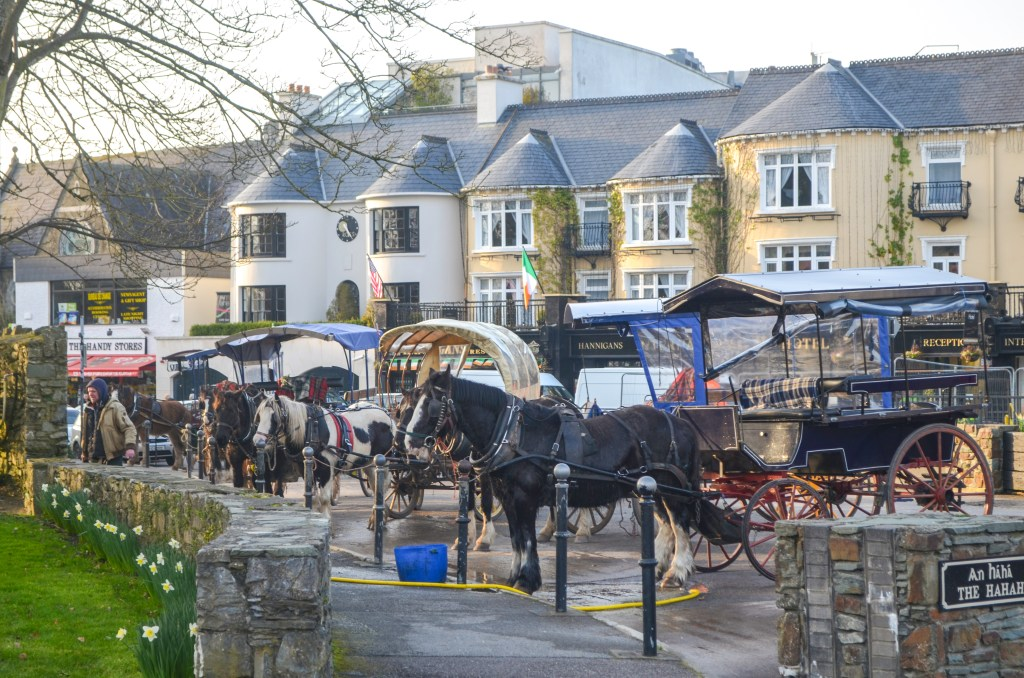 Killarney jaunting carts