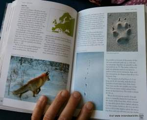 Species profile of the Red Fox in Tracks & Signs of the Animals and Birds of Britain and Europe