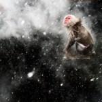 83_Jasper Doest (The Netherlands)-Snow moment