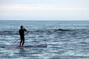 A paddleboarder looks on as the humpback surfaces