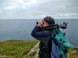 How to watch whales in Ireland